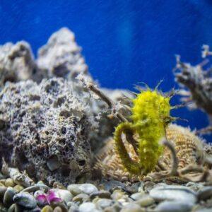 Aquarium Krk